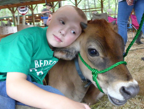 Dante, a rising second grade student at Davis School, visited his calf every morning before school! Image (c) JMcCT, 2014
